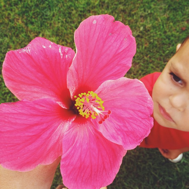 🌺👶. #vscocam #hawaii #alohaflower #hibiscus (at casita)