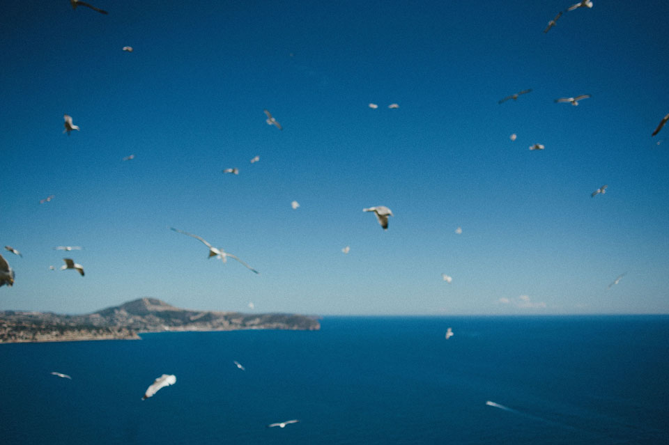 Seabirds at National Park of Penyal d'Ifac in Calpe, Spain.