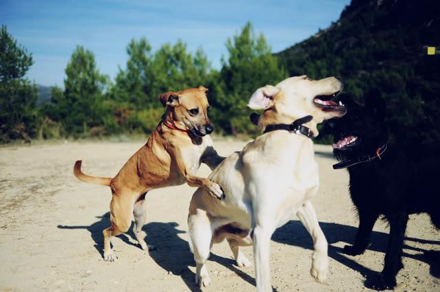 Los perros.