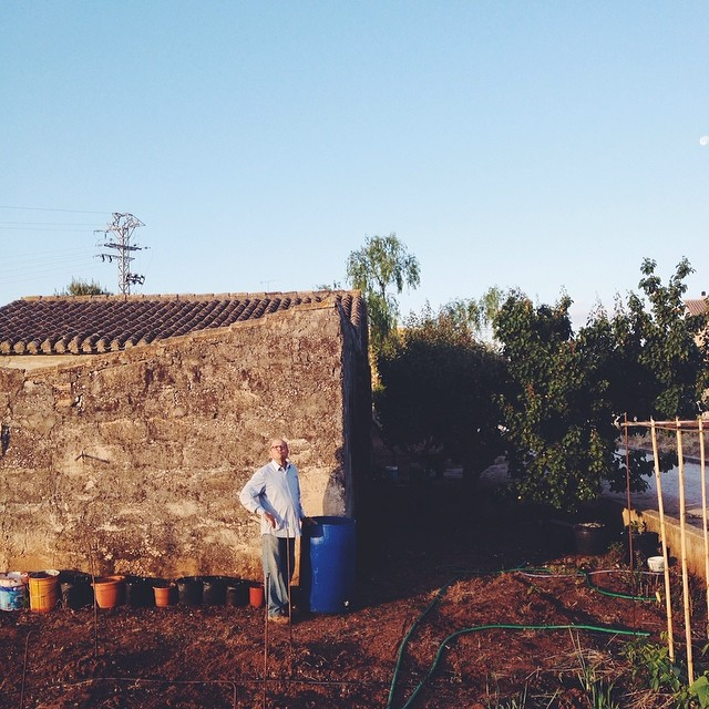 Mi suegro. Mediterranean farmer. #vscocam #lifeinspain (at El Vergel)