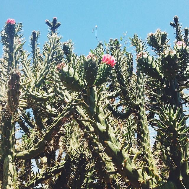 #cactus #vscocam #lifeinspain