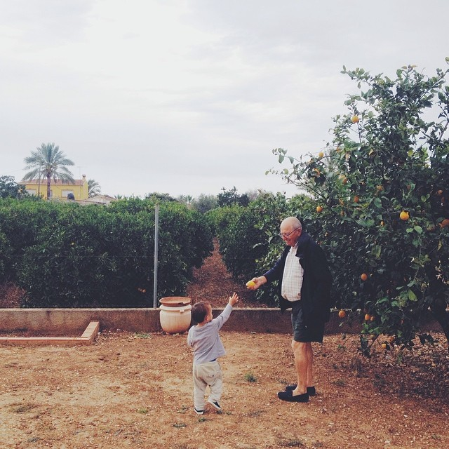 Picking lemons for lemon bowling.  Duh. #mediterranean #vscocam #adorableabuelos #lifeinspain #lemonbowling #españa (at El Vergel)