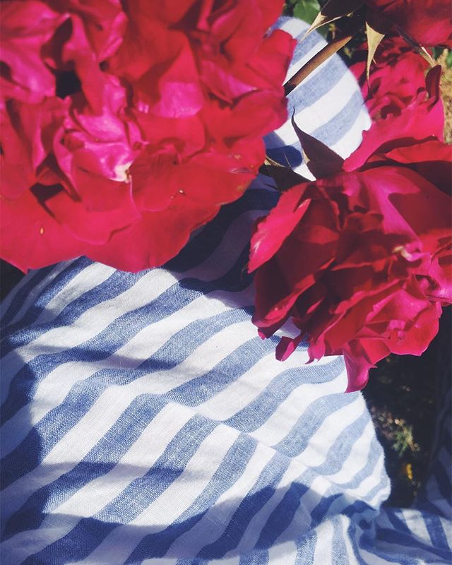 These incredible roses and my birthday pants from @mihofichefeux 🌹