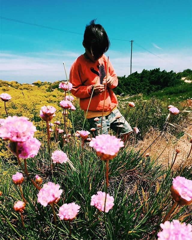 Picking wildflowers next to the sea. 👌 Slightly off camera: constant bickering, toddler meltdowns, trying to solve dramatic IRS problems from afar. #portugalroadtrip