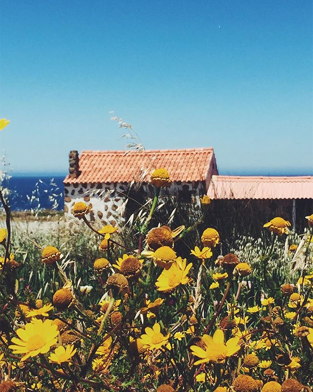 Wildflowers! Old stone houses! Blue skies! Wild Atlantic coast! #portugalroadtrip