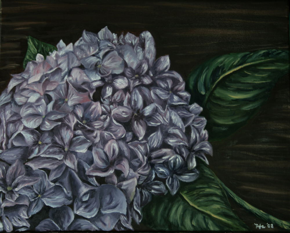 Chris' Hydrangea, Oil on canvas, 16''x20'', 2008