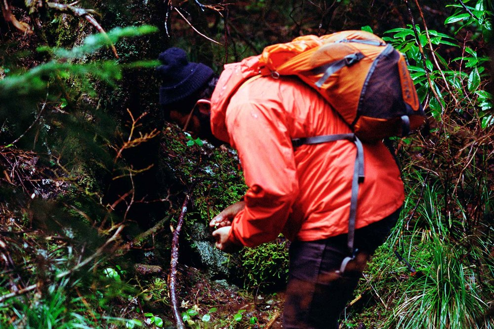 Priyesh mushroom hunting, Larch Mountain OR