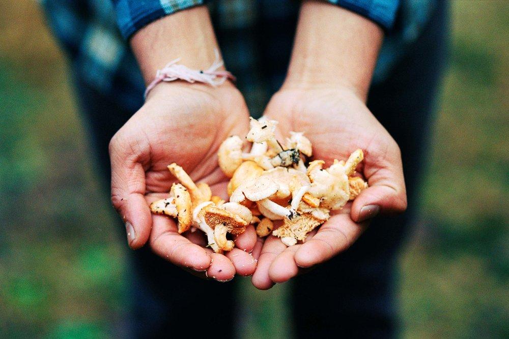 Priyesh mushroom hunting, Larch Mountain OR