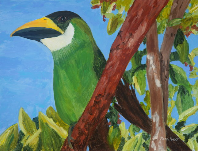 Emerald Toucan