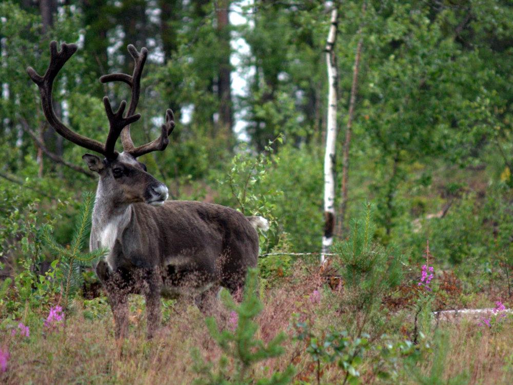 20120801_Moose3 (2).jpg