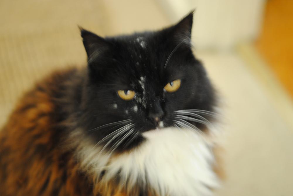 Cat not so jovial.