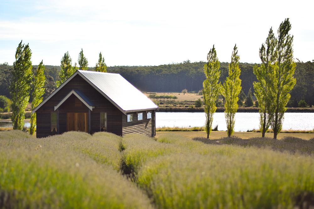 Lake views at Sault, Daylesford