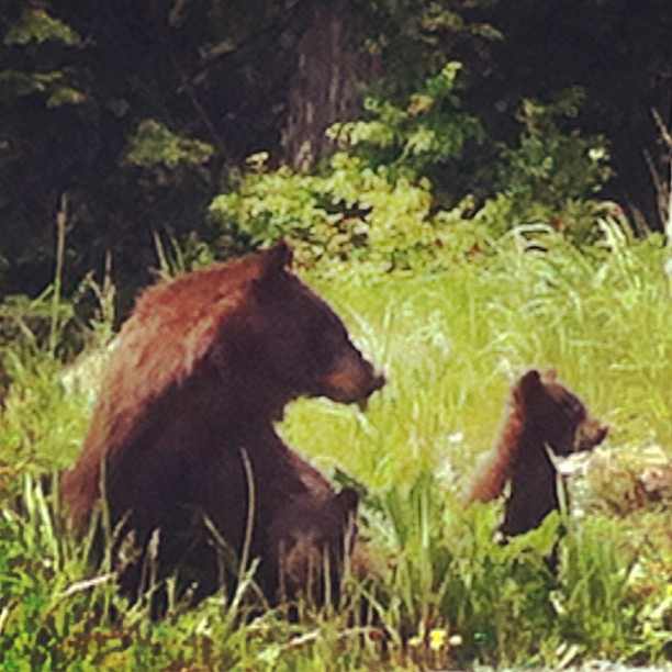 Black Bears up at Cyprus Mountain (Taken with  Instagram )