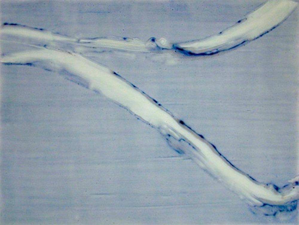 "Fresh, 2011   Acrylic on Yupo, 19"" x 25"""