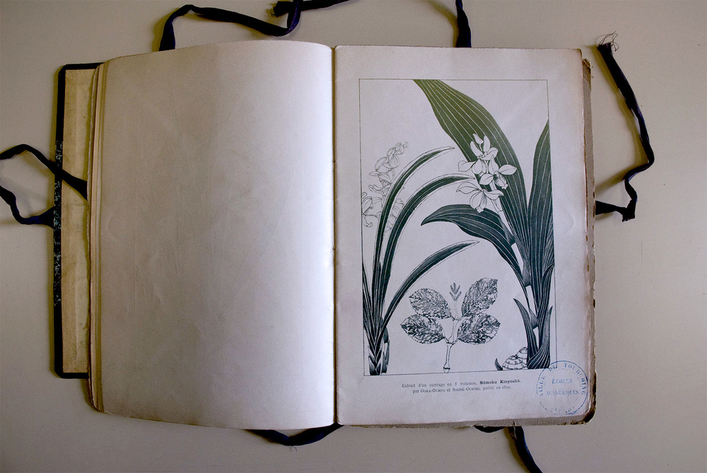 Fleurs et Plantes, v. 2  Lightjet print 27 x 40 centimeters 2011