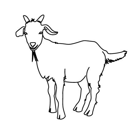 coffee goat