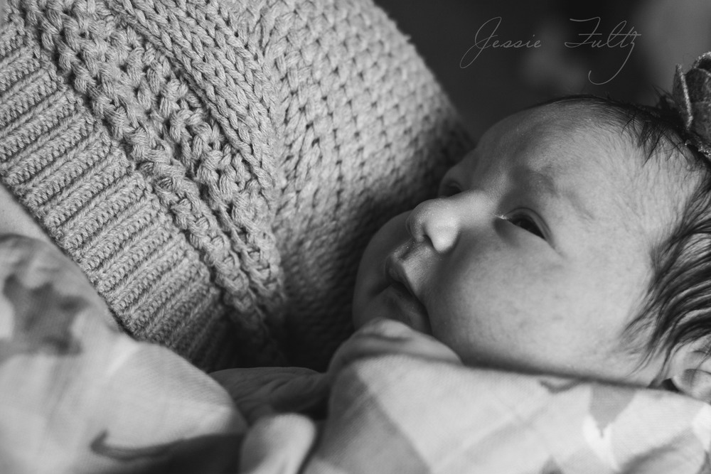 ashevillefresh48newbornphotography