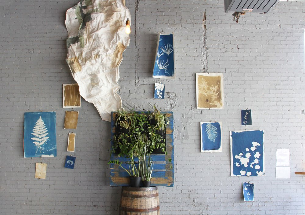 April 2016: Installation by the A4P (Air Purifying Plan Proliferation Project, a student-run organization of the University of Georgia; plant stand and paper sculpture) and photographer Rinne Allen (cyanotypes and van Dyke brown prints).