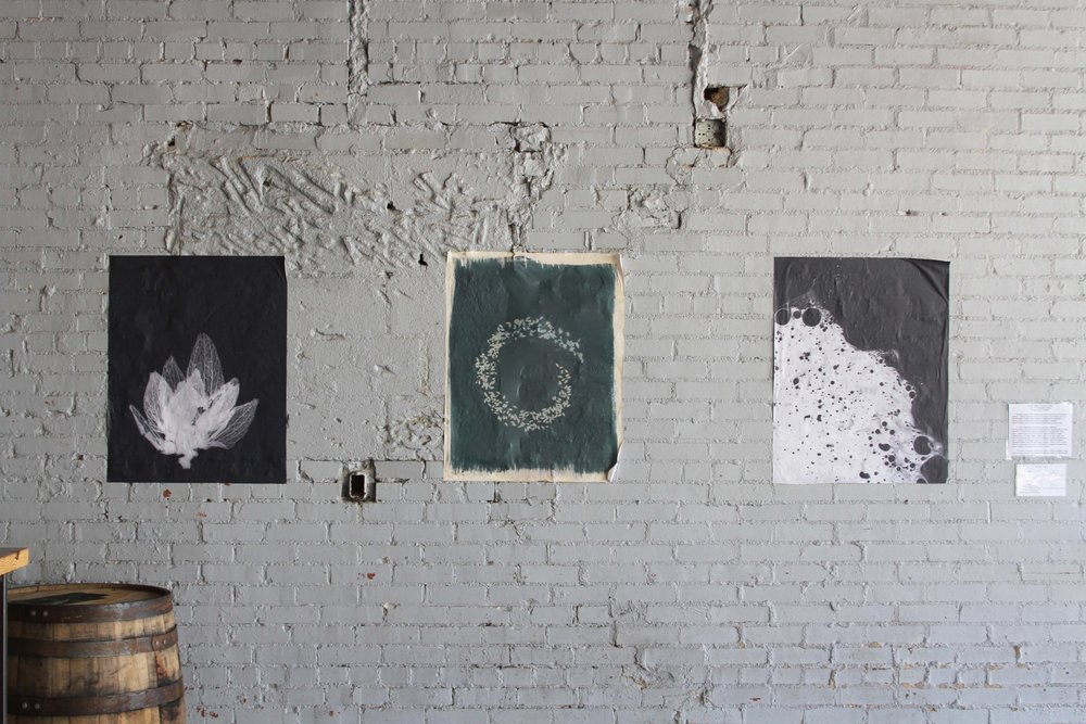 April 2017 : Wheat-pasted print installation by Jen Holt (silver photograms, scanned and printed) and Madeline Bates (cyanotypes, scanned and printed), exploring the life cycle of the fundamental ingredients in beer.