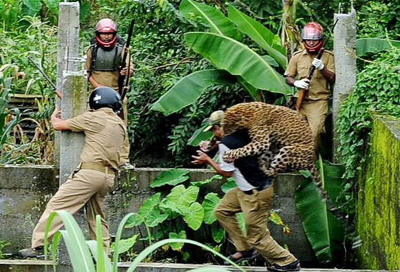 That leopard is pissed.   Sub-thought: What is the largest animal would you have a reasonable chance killing in a one-on-one battle to the death? (Thanks to the hike out of Tayrona Park for inspiring this discussion.)