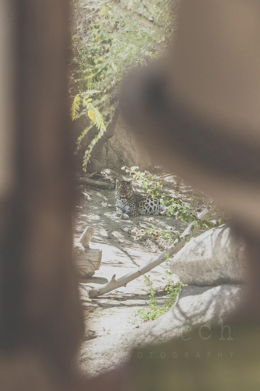 Klutch Photography,white rock family photographer, vancouver family photographer, whiterock lifestyle photographer, life unscripted photographer, life unscripted session, photography,Dina Ferreira Stoddard-1-39.jpg