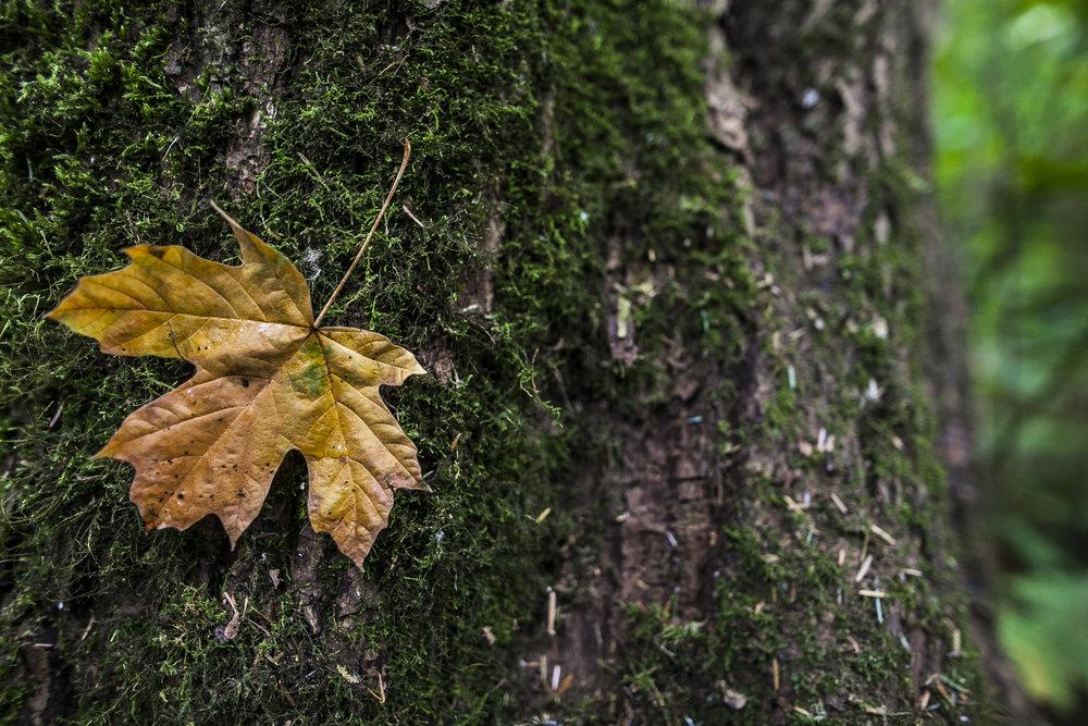 leave on tree