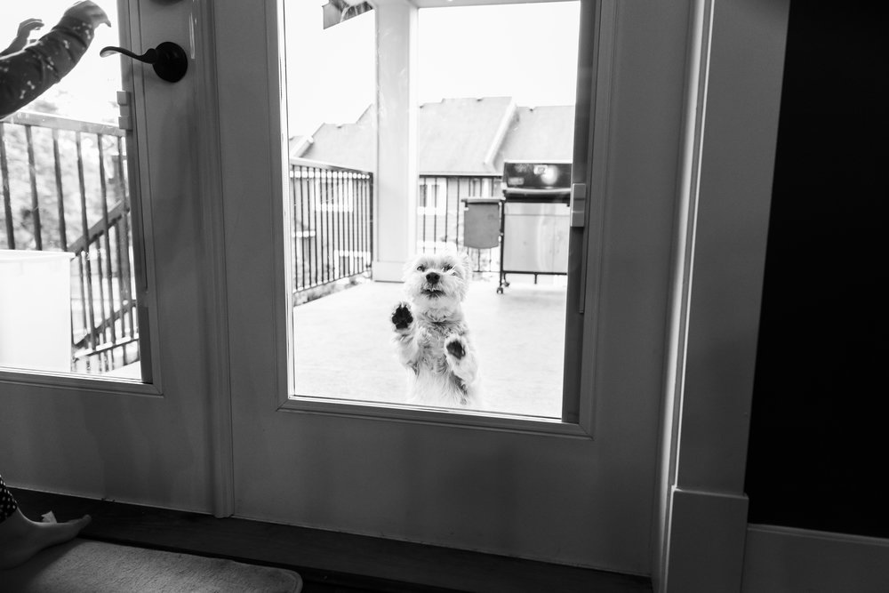 Surrey Family photographer. Vancouver family photographer, klutch Photography, documentary photography, candid photography, dog in window