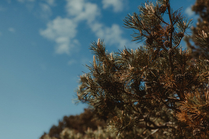 002-NikkiLeadbetter-HarvestMoon-AlexLouise.jpg