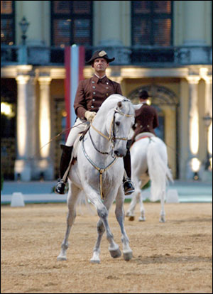 Andreas Hausberger from the Spanish Riding School, pictured on Maestoso Basowizza