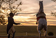The Lipizzan - available on DVD