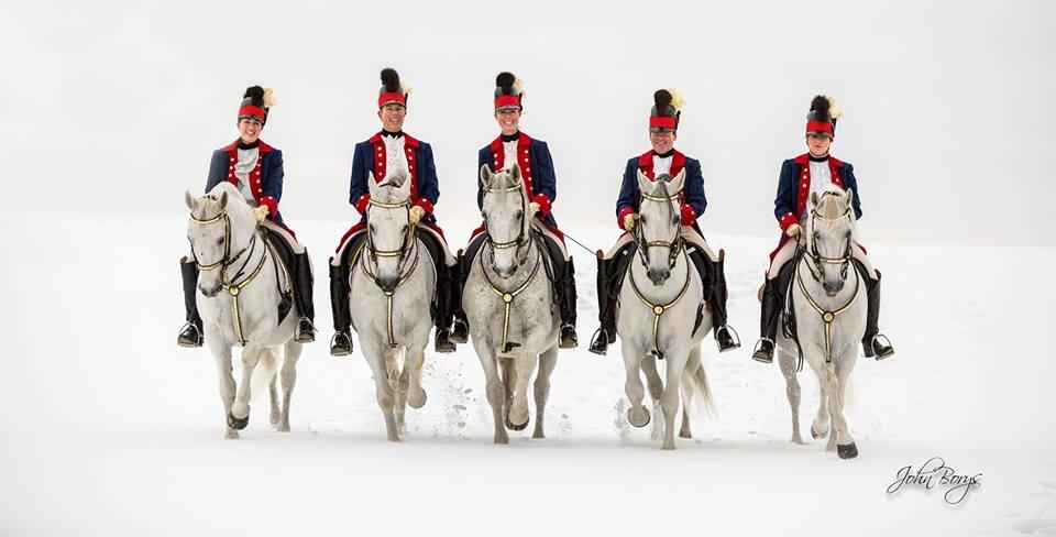 white-horse-vale-lipizzans.jpg