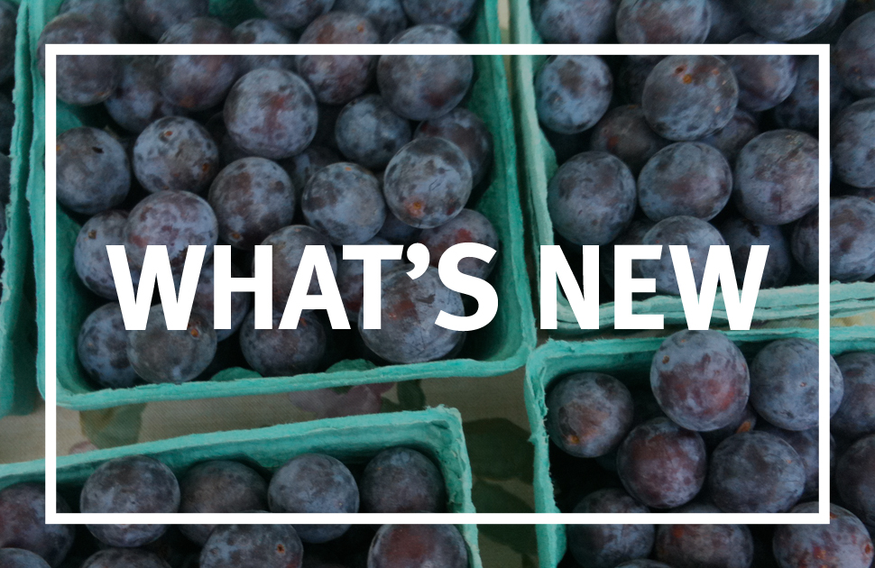 Follow our blog for a behind-the-scenes look at the Mount Holly Farmers Market.