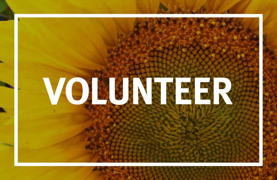 Join our team of incredible community volunteers. We're always looking for extra hands.