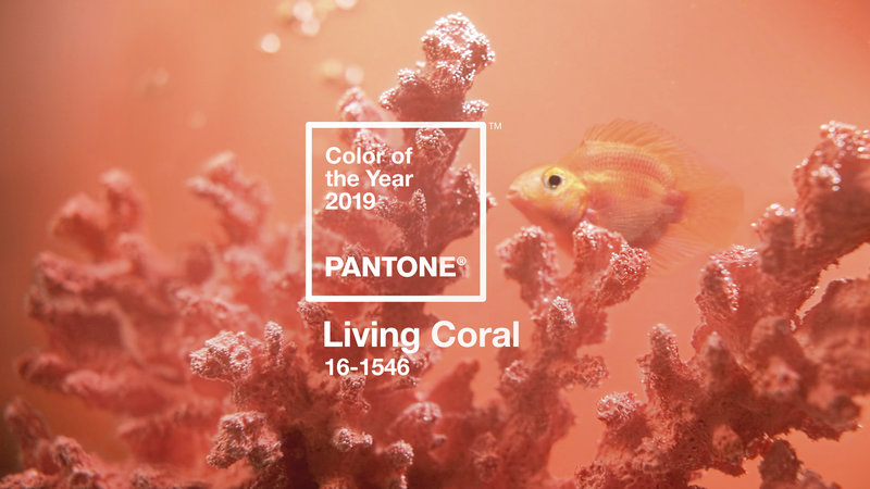"""""""Pantone's Color of the Year """"Living Coral""""  An animating and life-affirming coral hue with a golden undertone that energizes and enlivens with a softer edge"""" image and quote via Pantone"""
