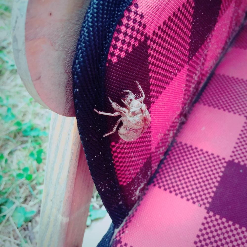 cicada-nest-and-story
