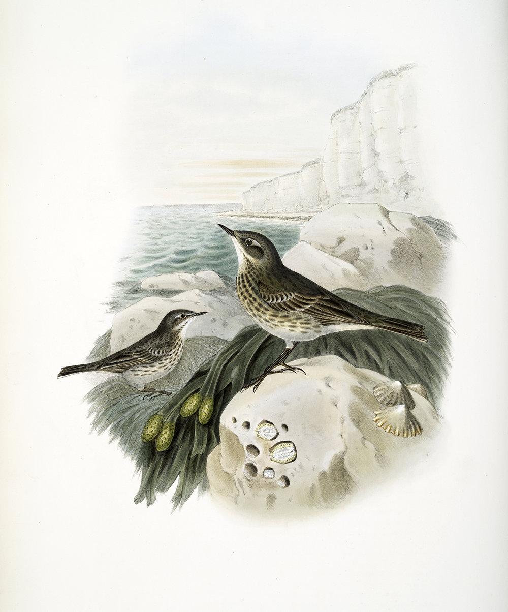 Vintage-Birds2.jpg