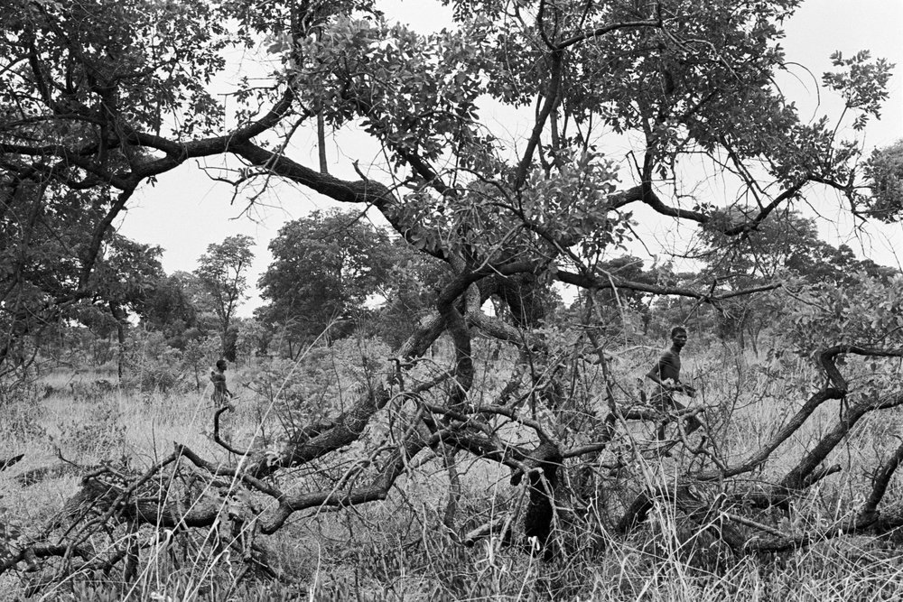 Honey hunt - The most precious kind of prey to bring home from hunt for San tribe hunters in Namibia is apparently honey. They have been living there for as many as 70.000 years and their life since then hasn't really changed much until the last century or even today.