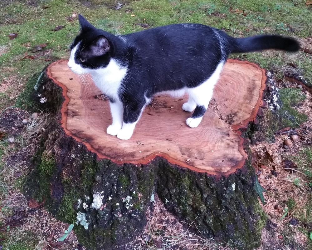 oak-tree-cat.jpg