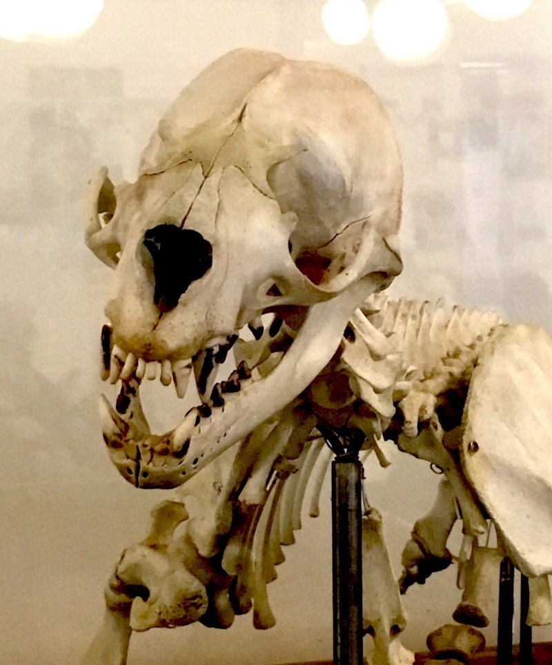 Bones 3.jpeg