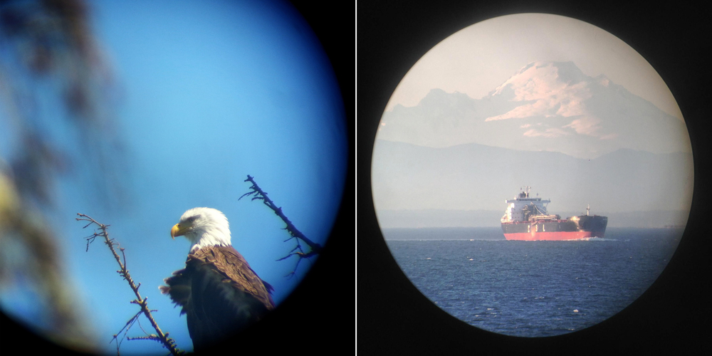 A Bald Eagle and Mt. Baker seen through a spotting scope