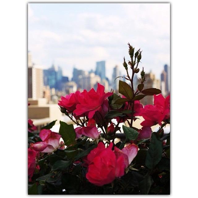#Manhattan #NewYork #downtown #roses #vscocam N1 #fuzel #instasize