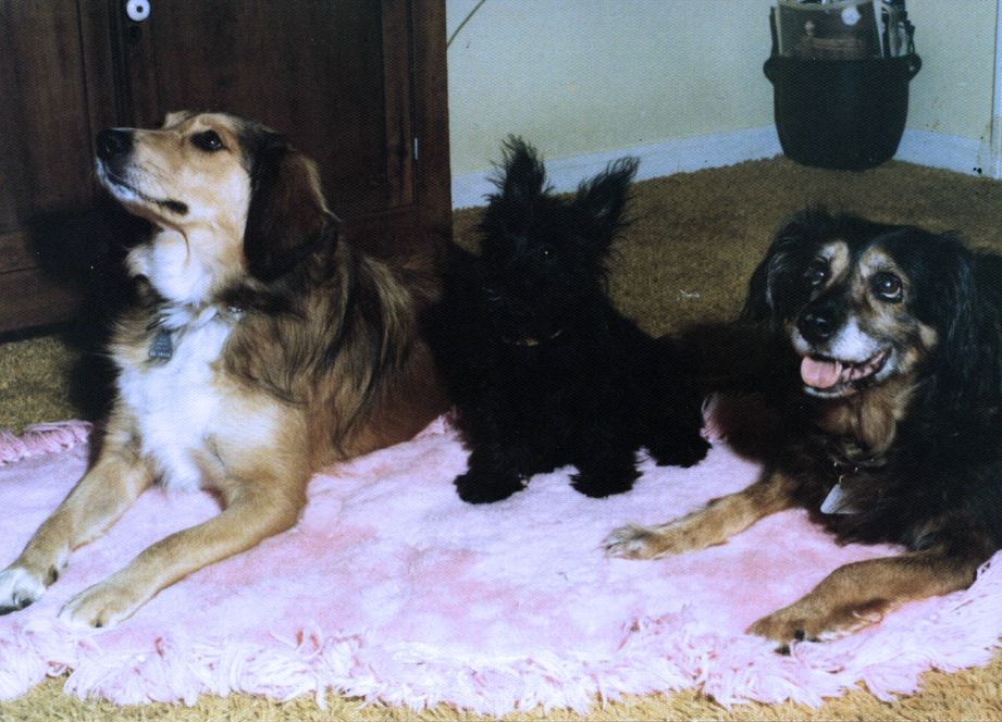 Sandy (a stray we adopted), Heather (the first of my Aunt Betty's three Scottie dogs, and Shamrock, the Grand Queen
