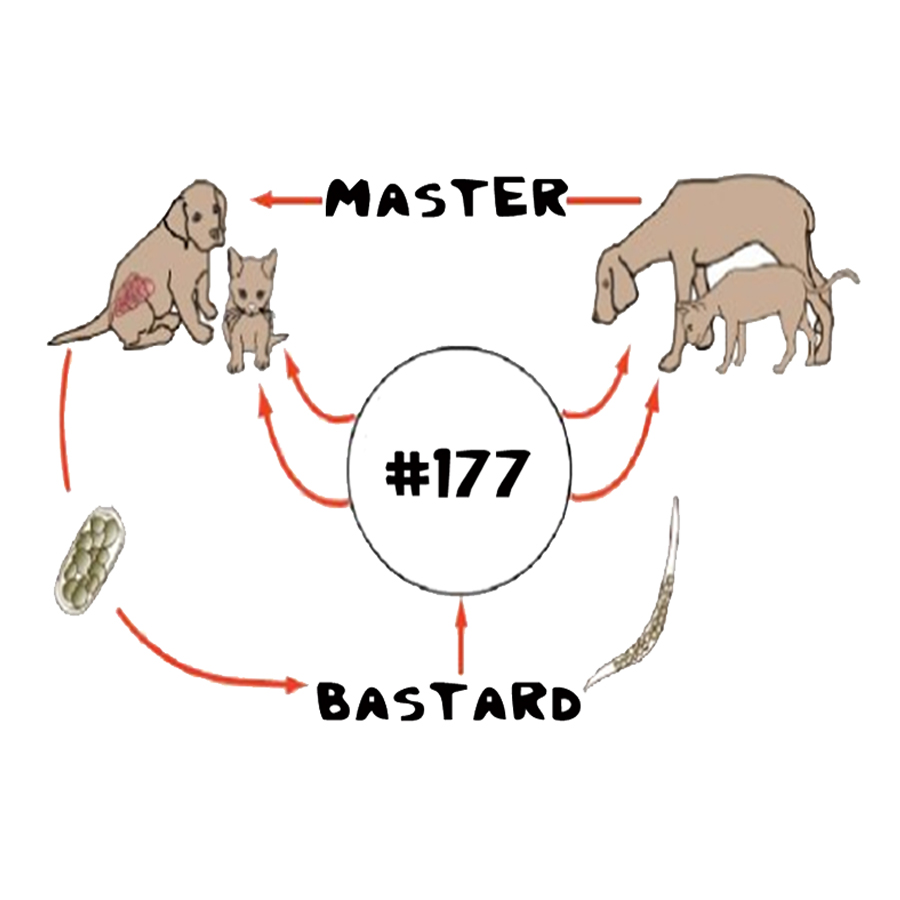 Master Bastard 177.jpg