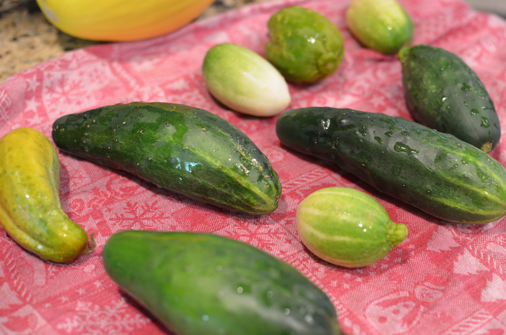 Start with washed unwaxed cucumbers.  This variety of organic cukes were in my last CSA delivery.  Aren't they beautiful?