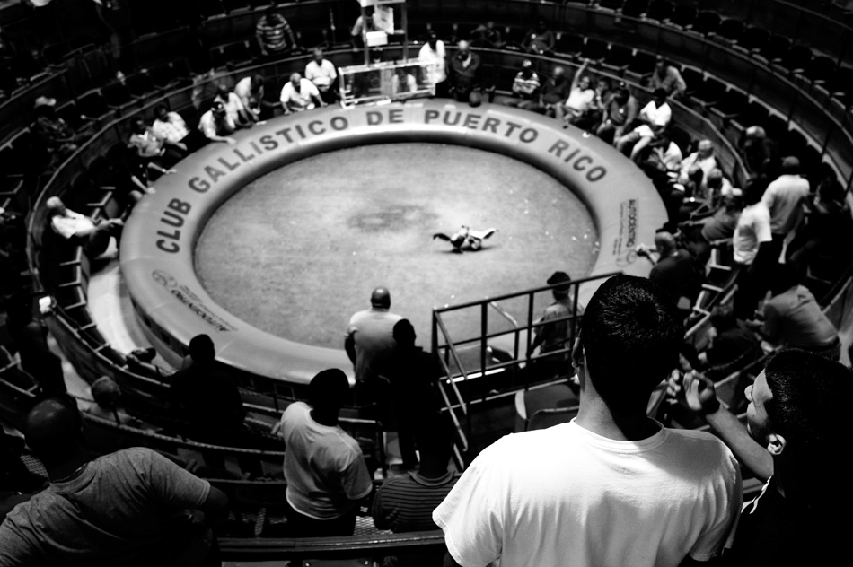 Attendees and trainers encircle the arena to watch a cockfight at Club Gallistico in San Juan, Puerto Rico on Thursday, June 25, 2009. Club Gallistico, a popular cockfighting franchise, has many locations throughout Puerto Rico.