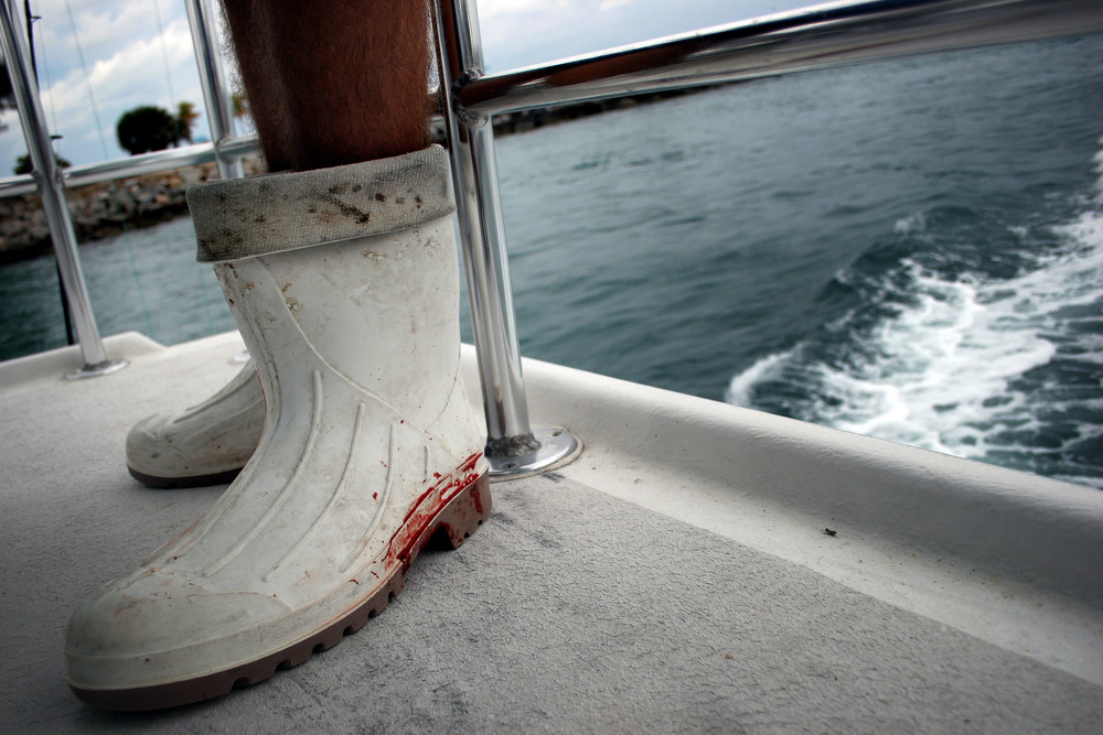 Blood from a small shark caught earlier stain Chad Raney's white, rubber boots. Raney, 20, works for the charter fishing business, Reel Fishing Inc.