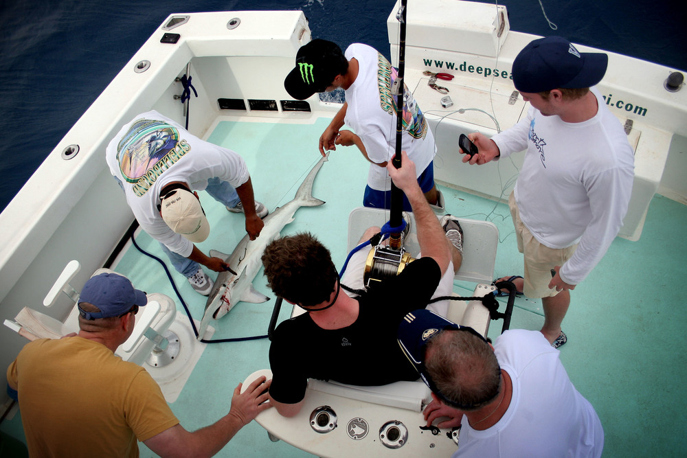 (Clockwise from top) Chad Raney, Tyler Andersen, Bob Cully, Quinn Cully, and Ric Andersen look on while Captain Manny Sivina cuts the line from a scalloped hammerhead's mouth. Shortly after the men posed for photographs with their catch, they released the shark back into the ocean.