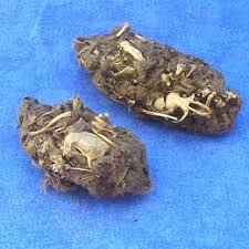 owl pellets.jpeg
