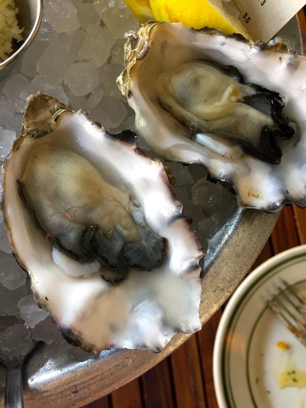 Phantom Creek Oysters, Cortes Island, Strait of Georgia, BC