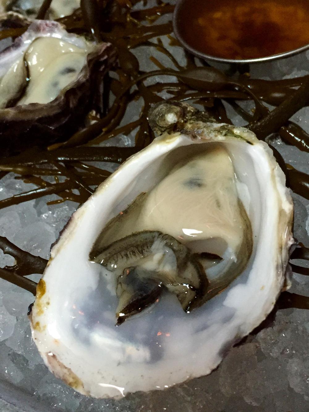 Fresh   Kumiai Oysters from Baja California.